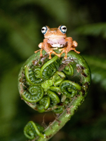 fern and frog