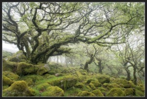 Fantastic-Tree-Photo