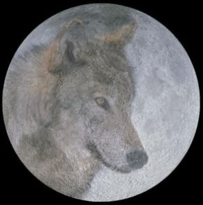 january moon