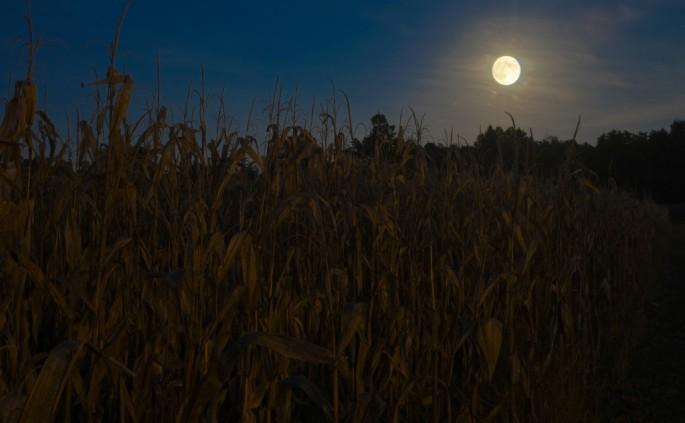 Moon-over-Corn2-1024x633